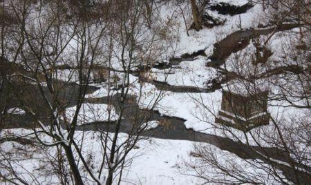 Житомирська відлига у 20 фотографіях