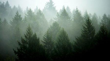 40 гектарів лісу не перетворяться в піщаний кар'єр, – прокуратура