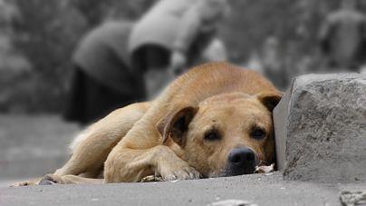 Новоград-Волинська міськрада витратить 180 тисяч на відлов тварин
