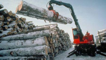 Виробництво у деревообробній та харчовій промисловостях області падає, – статистика