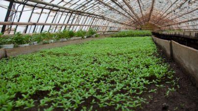 Квіти для житомирських клумб зимою вирощують у теплицях (ФОТОРЕПОРТАЖ)