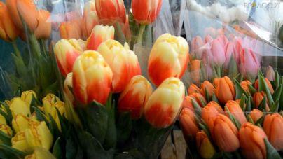 Стало відомо, чому житомиряни купують менше квітів на 8 Березня (ВІДЕО)