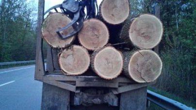 Поблизу Житомира колишній лісівник незаконно зрубав 4 дуби