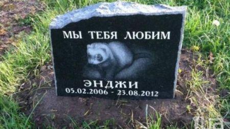 Житомиряни просять у влади відкрити кладовище для домашніх тварин