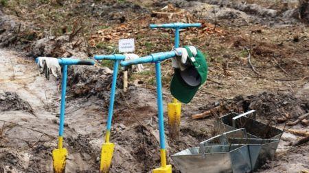 На Житомирщині з'явився ще один журналістський ліс (ФОТО)