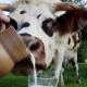 Стало відомо, які райони області годували Житомирщину м'ясом та молоком
