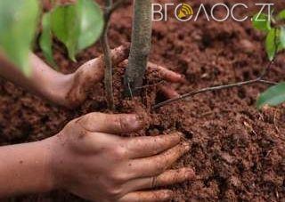 У Житомирі засадили схили яру, щоб попередити зсув ґрунту
