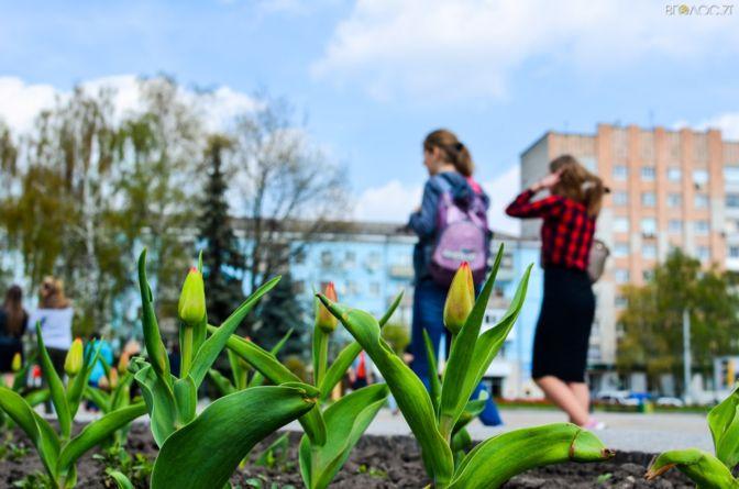 Відео, від якого захоплює дух. Весна у Житомирі