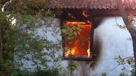 У Житомирі згорів тимчасовий прихисток безхатченків