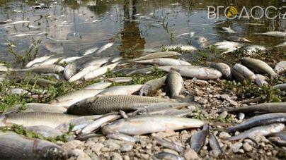 Вода у річках Случ та Хомора найдзвичайно токсична, – результати тестування