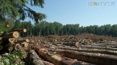 В Олевському районі незаконно вирубали дерева. Лісівники викликали поліцію