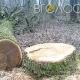 У житомирських дворах зріжуть дерева на 876 тисяч