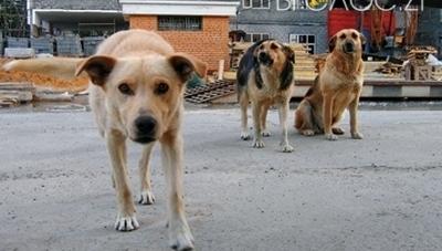 Центр захисту тварин, що на вулиці Параджанова, стане комунальним