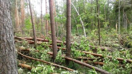 Бурелом знищив гектари лісу на Житомирщині