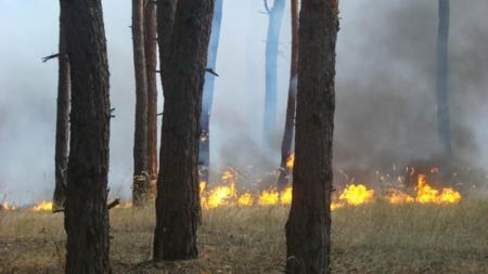 Місцевий житель розвів багаття, яке переросло у велику пожежу