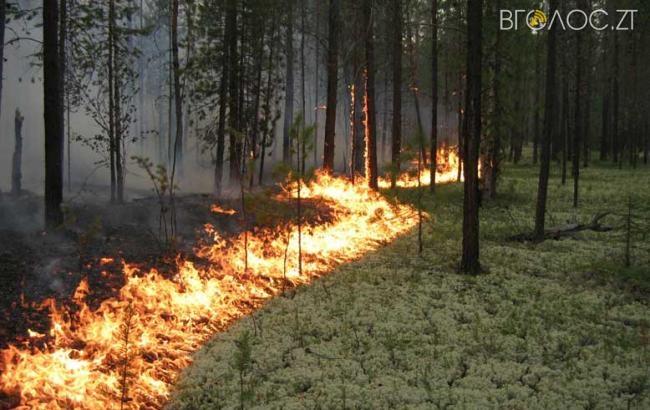На Овруччині підпалили ліс