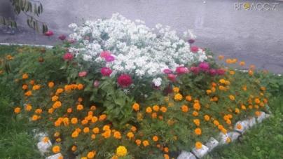 У Житомирі шукають, кому віддати грамоти та подарунки за озеленення міста (ФОТО)