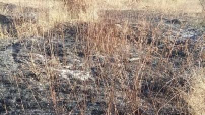 За добу в області згоріло 44 гектари сухої трави