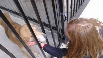 У новому «Центрі захисту тварин» можуть одночасно прийняти 50 собак