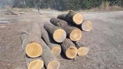 З підпільної пилорами правоохоронці вилучили майже 100 кубів деревини