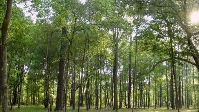 На чверть століття депутату віддадуть 5 тисяч гектарів мисливських угідь