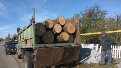СБУ розслідує нелегальне вивезення столітніх дубів