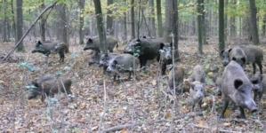 Житомирська облрада віддасть понад 2 тисячі гектарів мисливцям та рибалкам