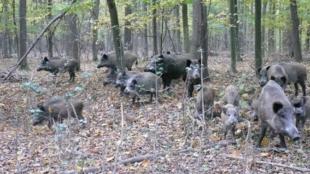 Майже 19 тисяч гектарів мисливських угідь на 25 років віддадуть організації бізнесмена Крігера