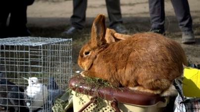 Агроуніверситет організовує виставку: покажуть кроликів, домашню птицю, фазанів і нутрій