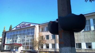 У Новограді зів'яли всі квіти у контейнерах на стовпах. Так у місті економили безкоштовну воду