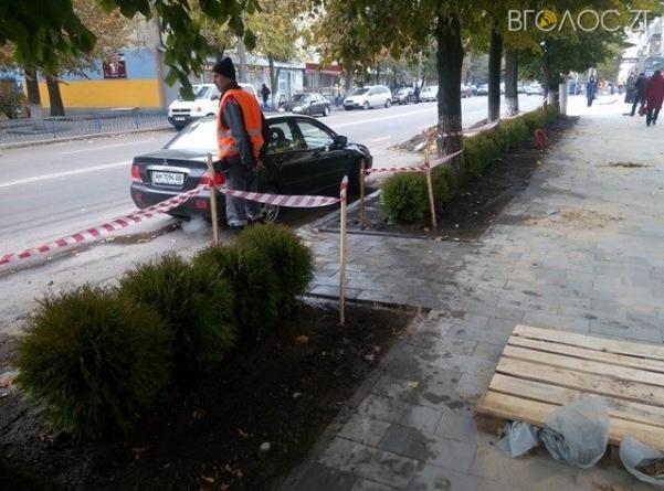 """На Театральній почали встановлювати """"живий"""" паркан з декоративних дерев (ФОТО)"""