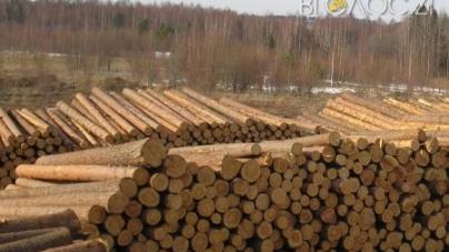 Лісгоспи області відправляють за кордон до 30 % деревини