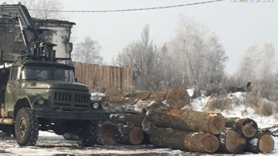 Правоохоронці вилучили 80 дубів вартістю майже півмільйона гривень