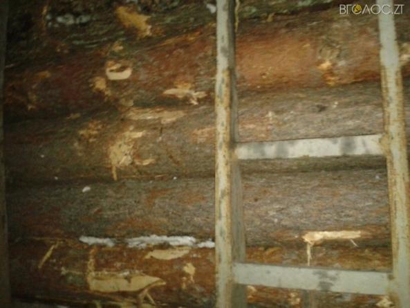 Майже на 100 тисяч незаконно вирубаної деревини вилучили правоохоронці