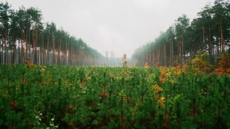 В одному із лісгоспів області на 50% зросла заробітна плата