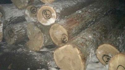 Депутати організували незаконний лісовий бізнес