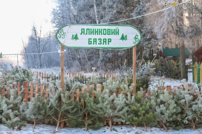 Лісгоспи області продали понад 37 тисяч новорічних ялинок