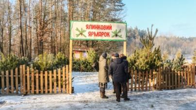 Житомирщина у трійці лідерів за кількістю проданих різдвяних дерев