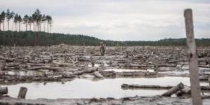 Справу щодо незаконної видачі дозволу на видобуток бурштину в Олевському районі знову розглядатиме суд