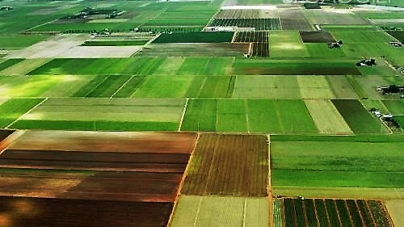 4 гектари землі з родовищами бурштину в Ємільчинському районі повернули державі