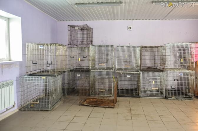Житомирський центр захисту тварин відловлюватиме собак у Малині
