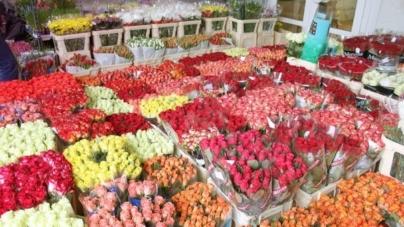 Стало відомо, де у Житомирі продаватимуть живі квіти до Міжнародного жіночого дня