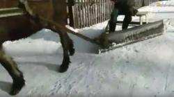 У Ємільчиному сніг на тротуарах прибирає кінь (ВІДЕО)