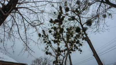 Синоптики розповіли, яку погоду чекати на Житомирщині