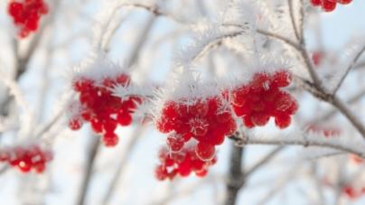 Синоптики розповіли, якою буде погода в Житомирі та області