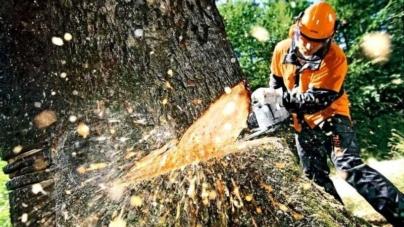 Депутат за змовою з лісівниками вирізав лісу на понад 3 мільйона