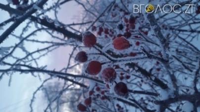 Вночі на Житомирщині очікуються заморозки