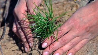 Понад 5 тисяч гектарів планують засадити лісівники упродовж року