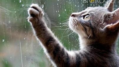 У Житомирі буде хмарно та дощитиме