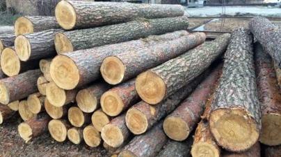 З «чорних лісорубів» стягнуть майже 220 тисяч завданої довкіллю шкоди
